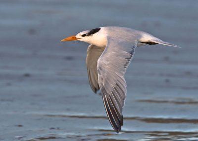 Birds Costa Rica kayak